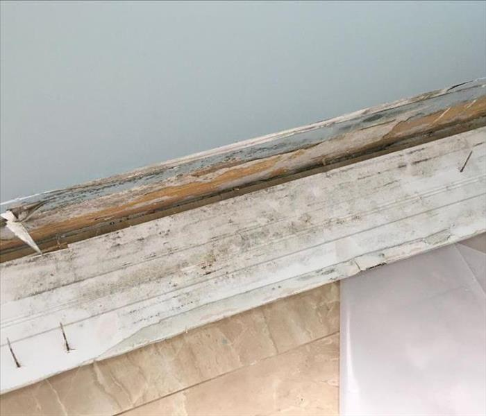 Photo shows mold growth on the reverse side of white base trim, bordering a blue wall.